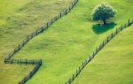Земельный пай — что это, как выделить и оформить, что с ним можно делать