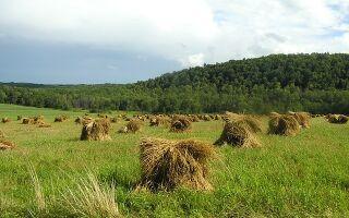 Как перевести земли сельхозназначения в ИЖС или ЛПХ: процедура и документы, законы