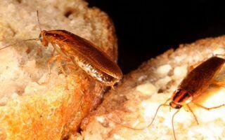 Что делать, если от соседей ползут тараканы: куда жаловаться, как защититься