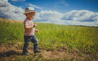 Дарение земельного участка: как правильно составить договор, оформить дарственную, какие еще документы нужны