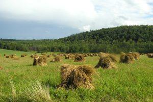 перевести земли сельхозназначения в дачное строительство