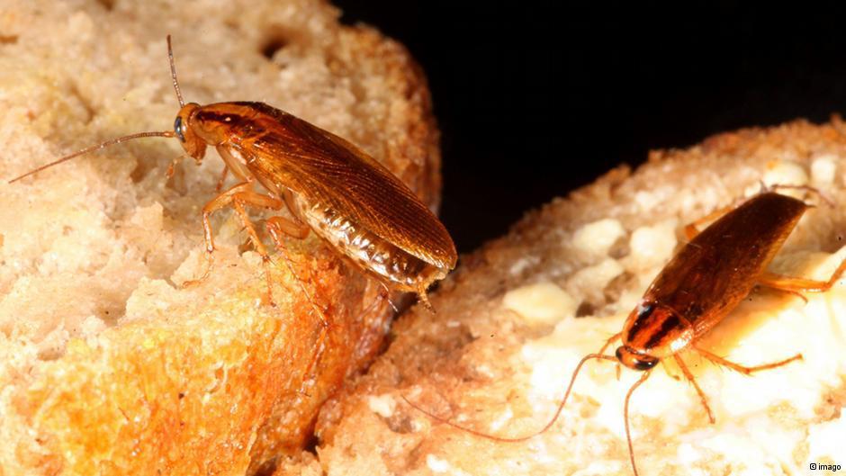 Если у соседей тараканы: что делать, куда обращаться и жаловаться
